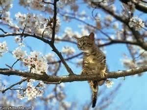 kitten in tree funnykittensite