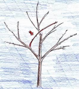 Kirschbaum Richtig Schneiden : obstbaumschnitt einfache tipps f r anf nger klare ~ Lizthompson.info Haus und Dekorationen