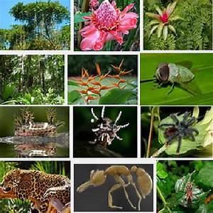 19 Tropical Amazon Rainforest Facts
