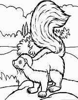 Skunk Coloring Pages Flower Pog sketch template