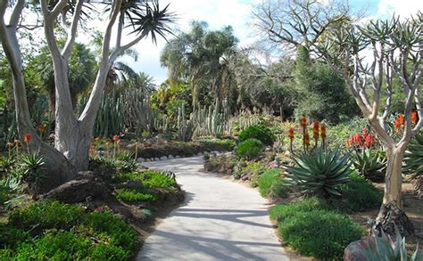 tips  gardening   dry climate    garden mow