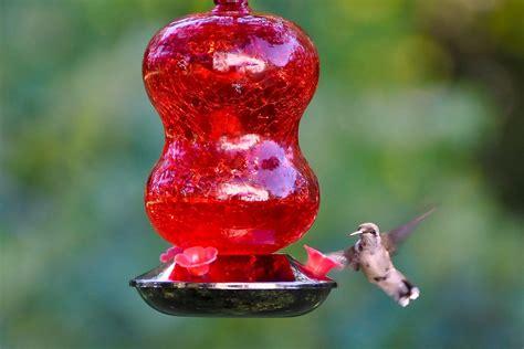 types  hummingbird feeders