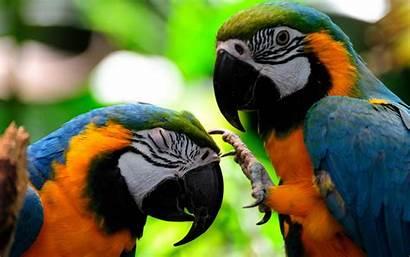 Parrots Colorful Bird Fighting Wallpapers Parrot Birds