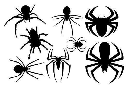 free download spider vector