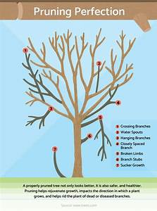 Pruning Primer Basic Steps For Pruning Trees And Shrubs