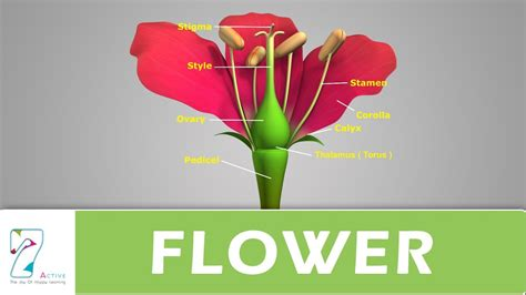 Flower Structure Its Parts Youtube