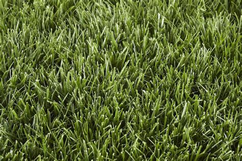 3 Best Grass Types For Lawns In San Diego, Ca