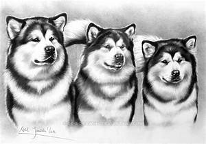 Alaskan Malamute Drawings Pictures To Pin On Pinterest