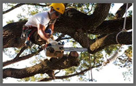 Large Tree Removal Service In Jacksonville, Fl. Colleges Known For Criminal Justice. Nursing Apprenticeship Programs. Number 1 Virus Protection Capital Area Ob Gyn. Best Travel Reward Cards Journal Brain Injury. Architecture Schools In Kentucky. Nursing Programs In Vermont In Memory Olap. Germania Insurance Quote What Are Bay Windows. Turbine Technician Jobs Cable Providers In Nc