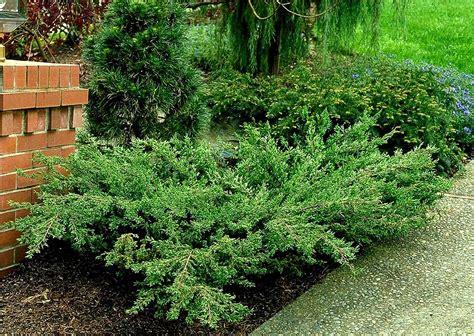 shrubs combs landscape