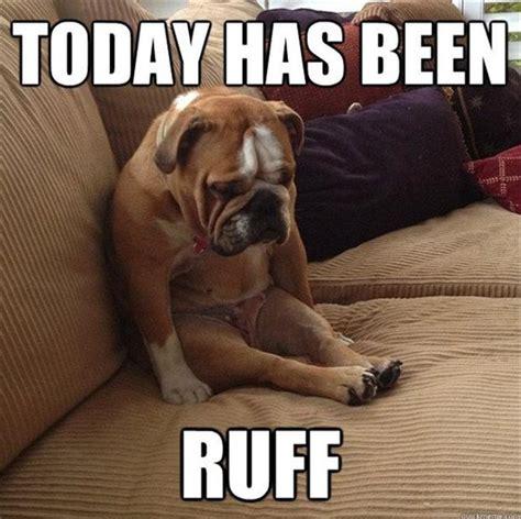 Sad Animal Memes - funny sad dog dump a day