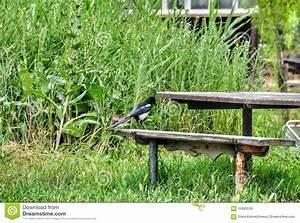 Elster Vogel Vertreiben : vogel elster stockfoto bild 55993539 ~ Lizthompson.info Haus und Dekorationen