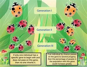 Population Genetics Part Ii  The Future Of Huntington U0026 39 S Disease