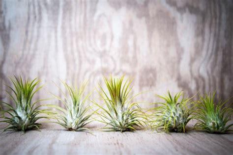 decoration murale plante d 233 coration murale plante