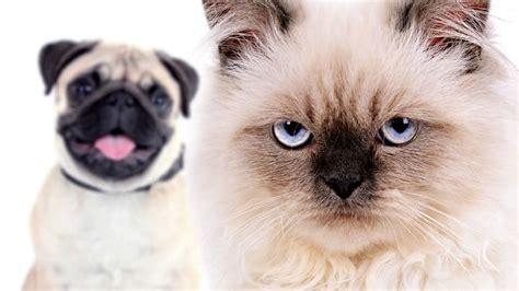 finally   cats facial expressions