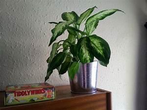 Zimmerpflanze Für Badezimmer : zimmerpflanze f r jedes zimmer passend ausw hlen ~ Sanjose-hotels-ca.com Haus und Dekorationen