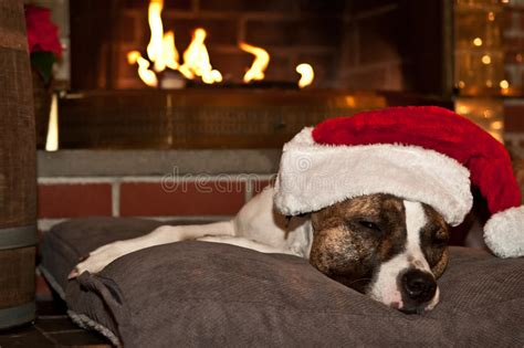dogs for fireplaces sleeping by fireplace stock image image of different