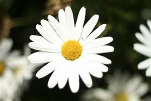Beautiful, White, Flower