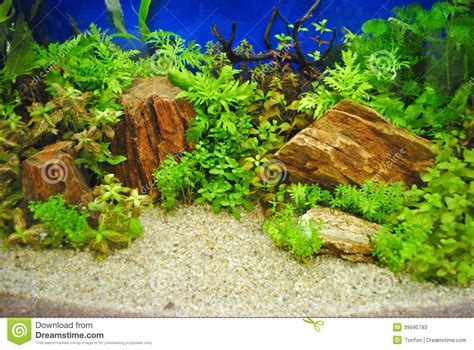 d 233 coration d un aquarium