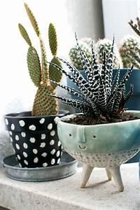 Zimmerpflanzen Für Dunkle Ecken : 13 besten pflanzen f r dunkle ecken bilder auf pinterest ~ Michelbontemps.com Haus und Dekorationen