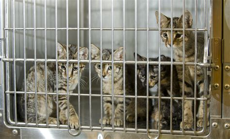 animal shelter cats in high places national adopt a shelter pet day american humane Lesleys