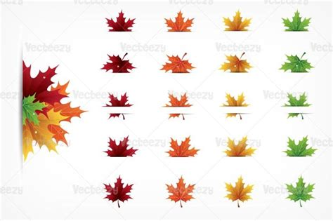 autumn maple leaves vector pack illustrations creative