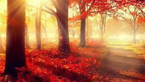 wallpaper, park, , 5k, , 4k, wallpaper, , autumn, , beautiful, , leaves, , trees, , nature, , 12401