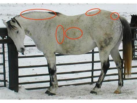 hufrehe informationen auf pferd und reiter
