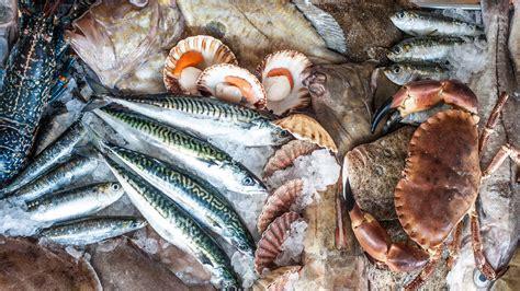 festival  peixe de setubal  ja  proximo fim de semana