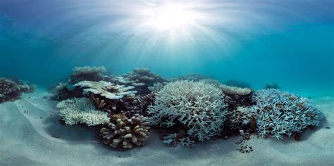 Great Barrier Reef Suffers 2nd Year of Mass Bleaching | Financial Tribune