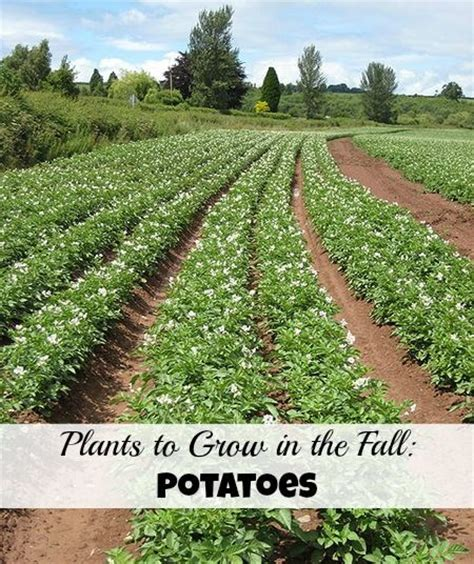 what can you plant in the fall 1000 images about tips for veggies on pinterest gardens raised beds and vegetables