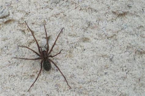araignee dans la maison araignee maison 28 images identification araign 233 e plaidoyer pour un quot monstre quot