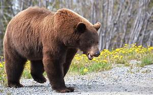 The Bears of All Bears | Travel, Photography, and Other ...  Grizzly