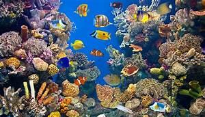 Definition of an Aquatic Ecosystem | Sciencing  Aquatic