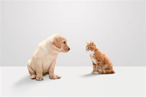 cats better dog cat dogs than vs reasons puppies puppy kitten kittens why source getty rex
