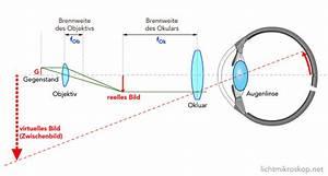 Lichtbrechung Berechnen : wie funktioniert ein mikroskop funktion lichtmikroskop ~ Themetempest.com Abrechnung