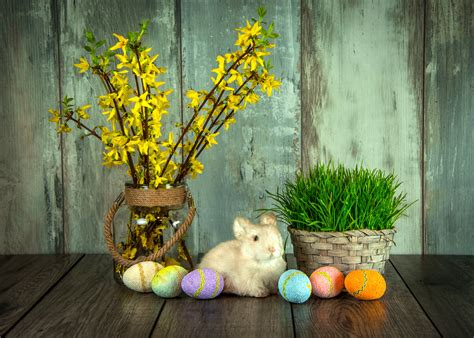 images flower animal cute spring green holiday