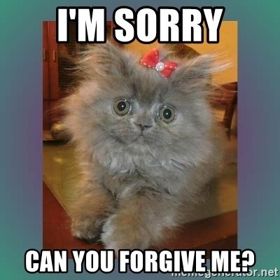 Forgive Me Meme - i m sorry can you forgive me cute cat meme generator