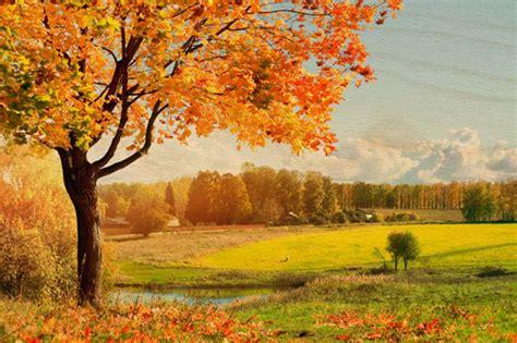 fall landscape wood prints
