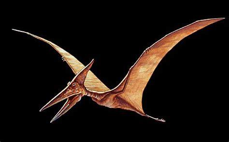 Image result for Pterosaur