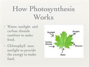Explain How Photosynthesis Works