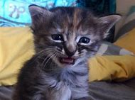 Cat Sad Purrmanently
