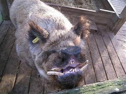Ugly Animal Animals Funny Wallpapers Dog Pet
