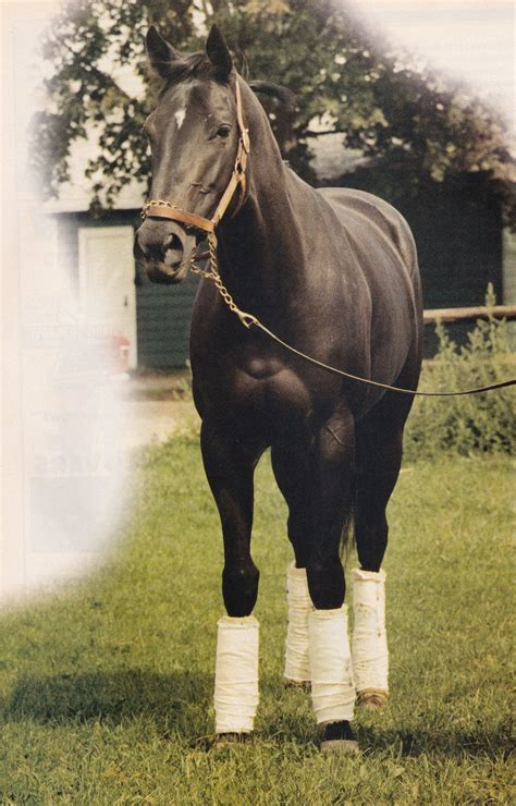 ruffian horse racing horses race filly scan thoroughbred magazine most equus another racehorse races straight 1975 won records bay 1974