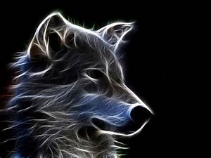 wolf Full HD Wallpaper and Background | 2560x1920 | ID:436384