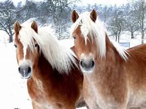 Bilder Von Pferden : welche fellfarbe bei pferden m gt ihr am liebsten seite 7 allmystery ~ Frokenaadalensverden.com Haus und Dekorationen