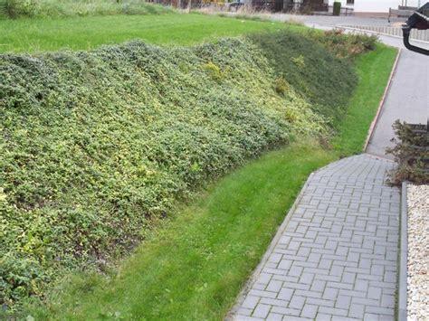 Bodendecker Am Hang by Landschaftspflege J 252 Rgen Findeklee
