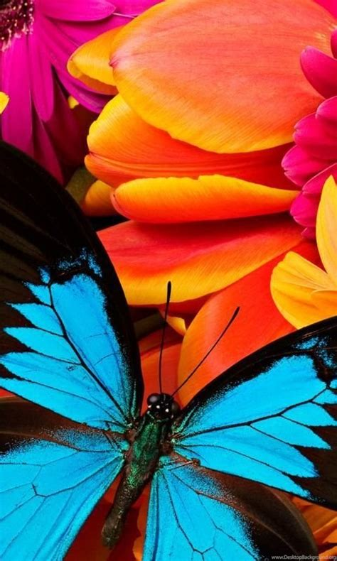 Animated Live Wallpaper Android - butterfly animated color live wallpapers for android