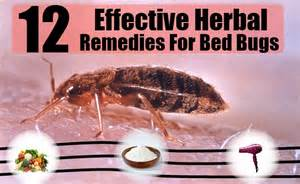 12 herbal remedies for bed bugs how to cure bed bugs naturally home remedies