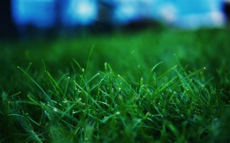 Gallery Of Green Grass Closeup 05 Iphone 6 Wallpapers Hd